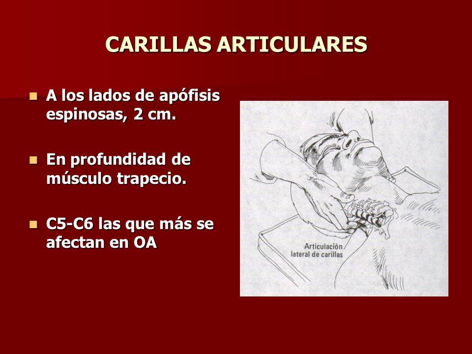 CARILLAS ARTICULARES A los lados de apófisis espinosas, 2 cm. A los lados de apófisis espinosas, 2 cm. En profundidad de músculo trapecio. En profundi