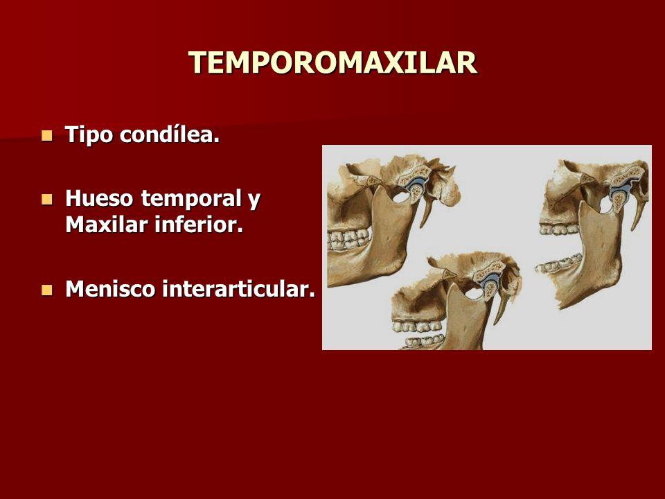 TEMPOROMAXILAR Tipo condílea. Tipo condílea. Hueso temporal y Maxilar inferior. Hueso temporal y Maxilar inferior. Menisco interarticular. Menisco int