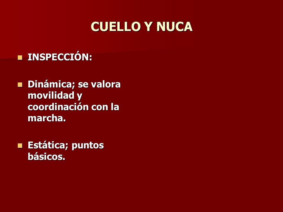 N.SUBOCCIPITAL DE A. Referencia: Referencia: Tuberosidad occipital externa.