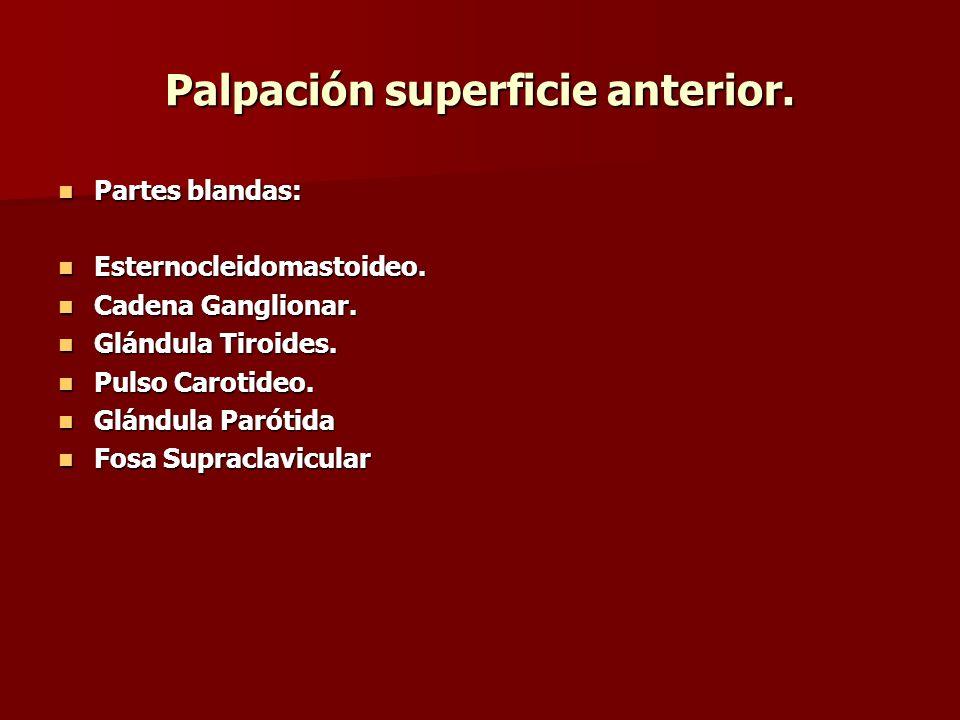 Palpación superficie anterior. Partes blandas: Partes blandas: Esternocleidomastoideo. Esternocleidomastoideo. Cadena Ganglionar. Cadena Ganglionar. G