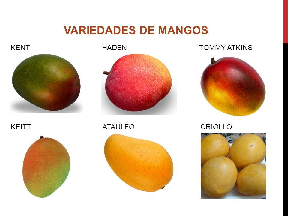 KENT HADEN TOMMY ATKINS KEITT ATAULFO CRIOLLO VARIEDADES DE MANGOS