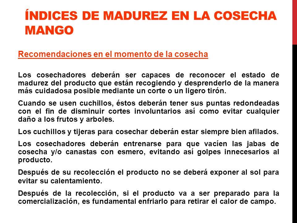 ÍNDICES DE MADUREZ EN LA COSECHA MANGO Recomendaciones en el momento de la cosecha Los cosechadores deberán ser capaces de reconocer el estado de madu