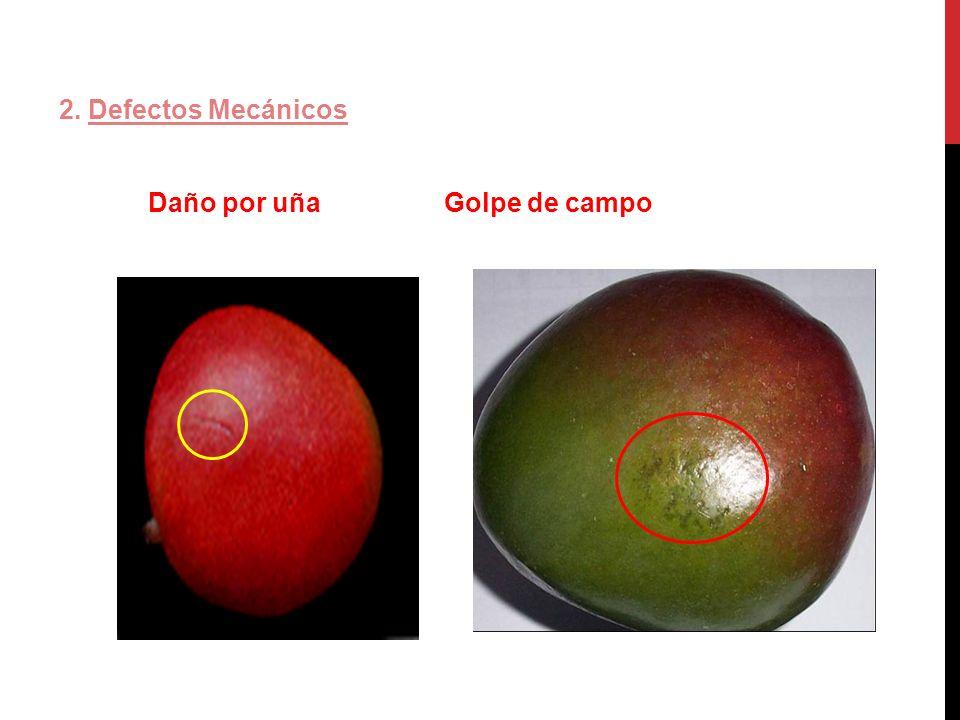 2. Defectos Mecánicos Daño por uña Golpe de campo