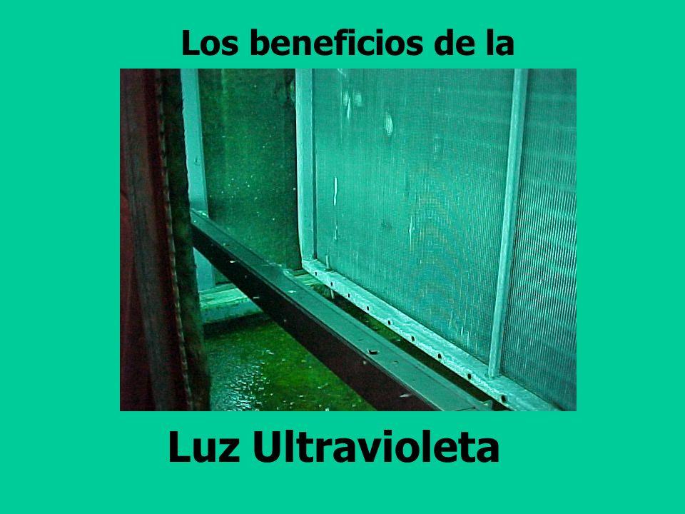 Los beneficios de la Luz Ultravioleta
