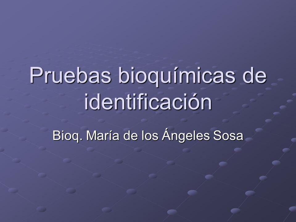 Pruebas bioquímicas de identificación Bioq. María de los Ángeles Sosa