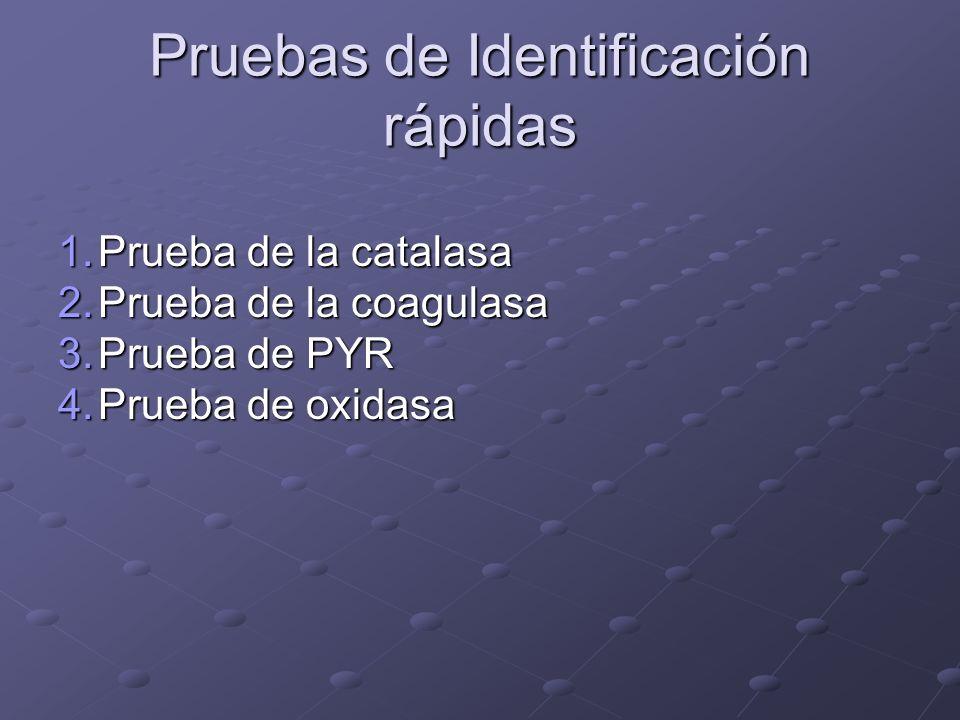 Pruebas de Identificación rápidas 1.Prueba de la catalasa 2.Prueba de la coagulasa 3.Prueba de PYR 4.Prueba de oxidasa