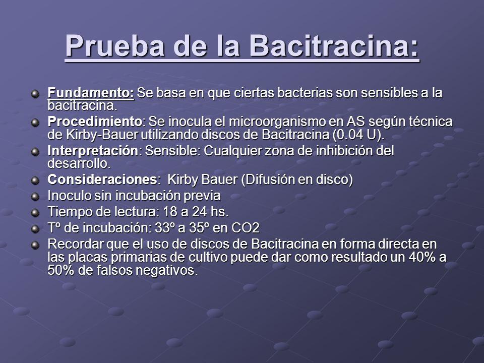Prueba de la Bacitracina: Fundamento:Se basa en que ciertas bacterias son sensibles a la bacitracina. Fundamento: Se basa en que ciertas bacterias son
