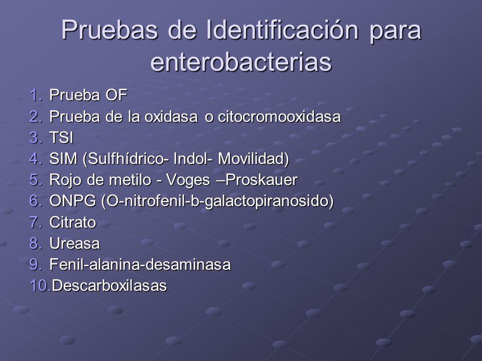 Pruebas de Identificación para enterobacterias 1.Prueba OF 2.Prueba de la oxidasa o citocromooxidasa 3.TSI 4.SIM (Sulfhídrico- Indol- Movilidad) 5.Roj