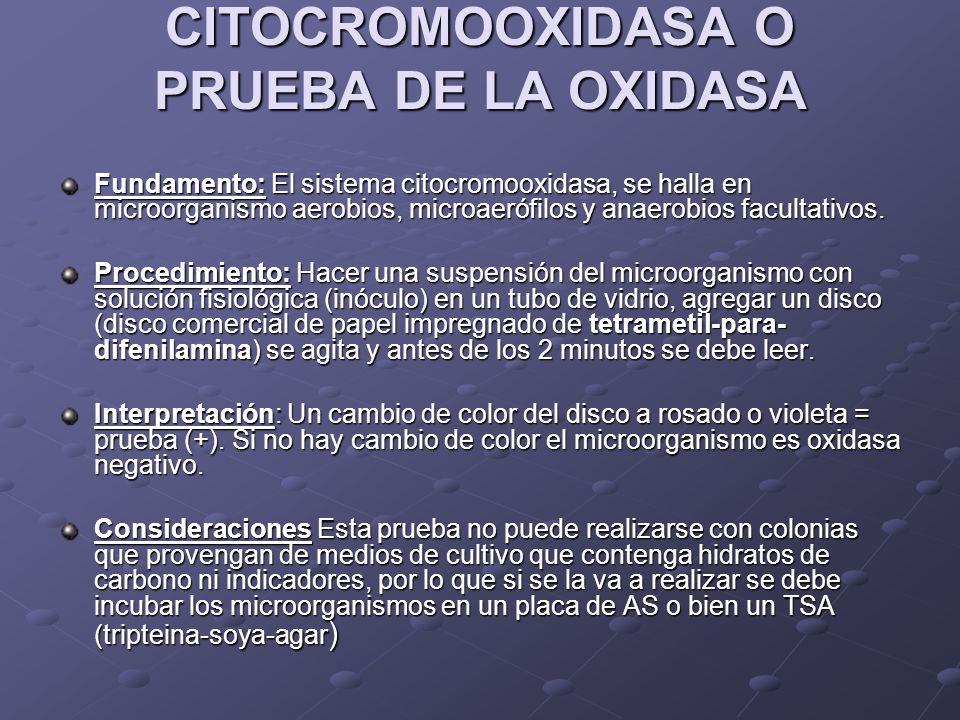 CITOCROMOOXIDASA O PRUEBA DE LA OXIDASA Fundamento:El sistema citocromooxidasa, se halla en microorganismo aerobios, microaerófilos y anaerobios facul