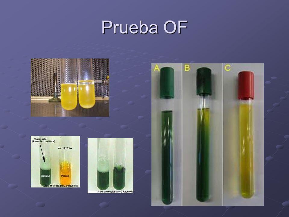 Prueba OF
