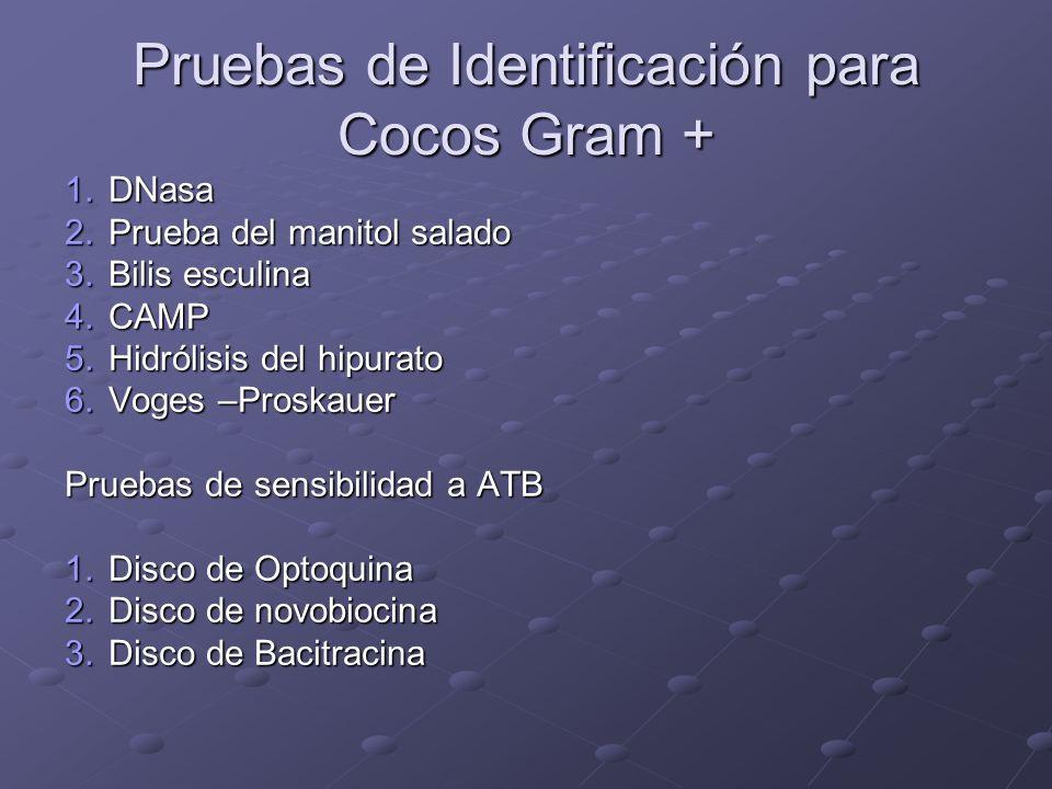 Pruebas de Identificación para Cocos Gram + 1.DNasa 2.Prueba del manitol salado 3.Bilis esculina 4.CAMP 5.Hidrólisis del hipurato 6.Voges –Proskauer P