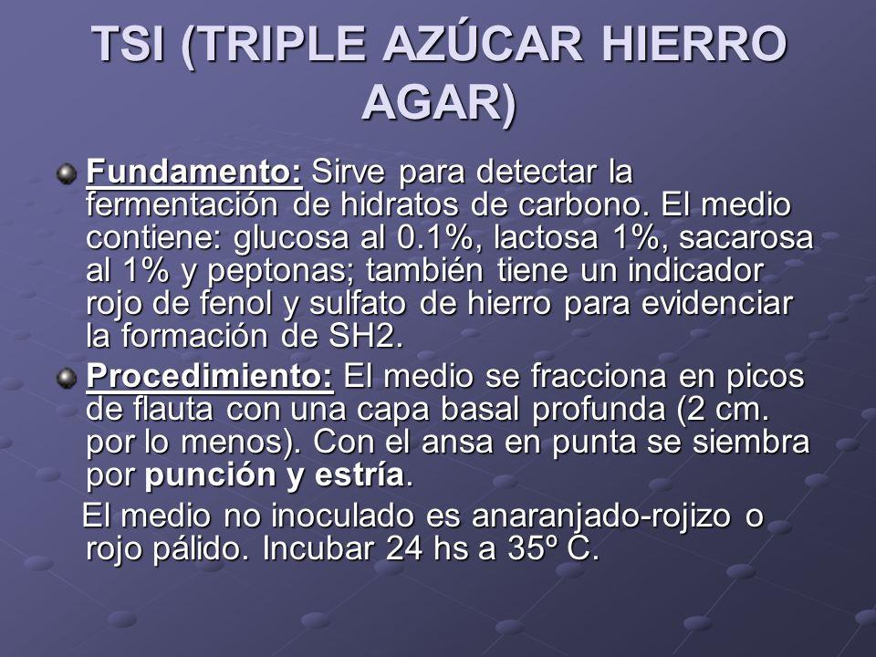 TSI (TRIPLE AZÚCAR HIERRO AGAR) Fundamento:Sirve para detectar la fermentación de hidratos de carbono.El medio contiene: glucosa al 0.1%, lactosa 1%,
