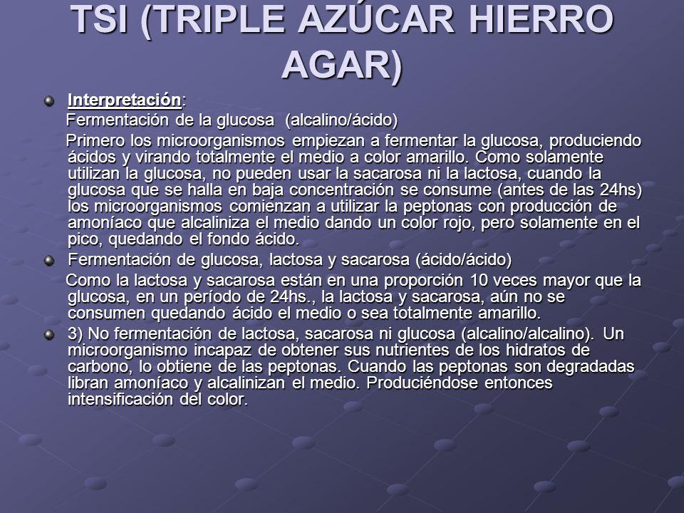 TSI (TRIPLE AZÚCAR HIERRO AGAR) Interpretación: Fermentación de la glucosa (alcalino/ácido) Fermentación de la glucosa (alcalino/ácido) Primero los mi