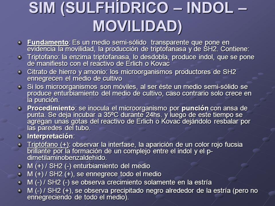 SIM (SULFHÍDRICO – INDOL – MOVILIDAD) Fundamento: Es un medio semi-sólido transparente que pone en evidencia la movilidad, la producción de triptofana
