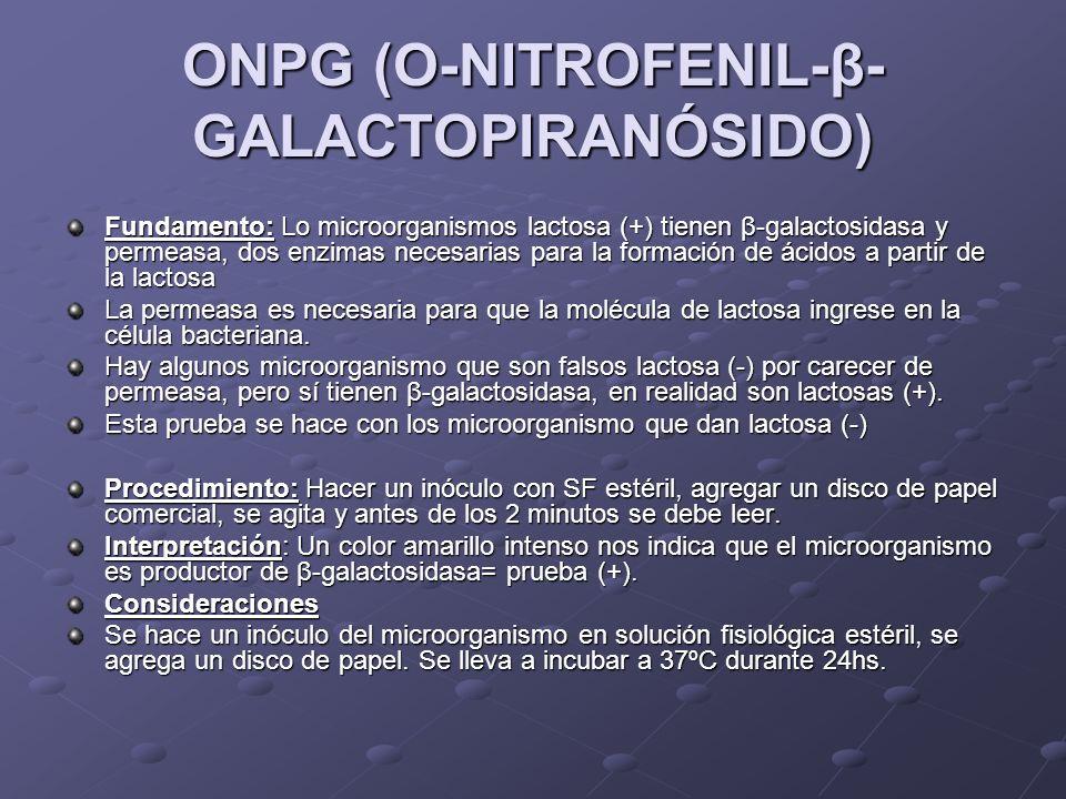 ONPG (O-NITROFENIL-β- GALACTOPIRANÓSIDO) Fundamento:Lo microorganismos lactosa (+) tienen β-galactosidasa y permeasa, dos enzimas necesarias para la f