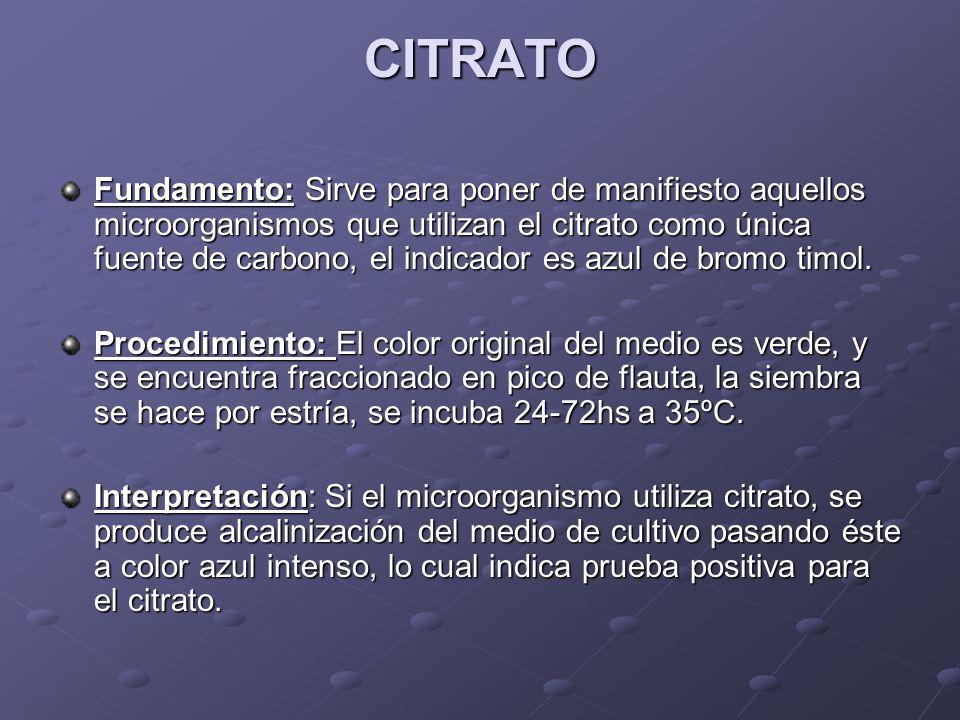 CITRATO Fundamento:Sirve para poner de manifiesto aquellos microorganismos que utilizan el citrato como única fuente de carbono, el indicador es azul