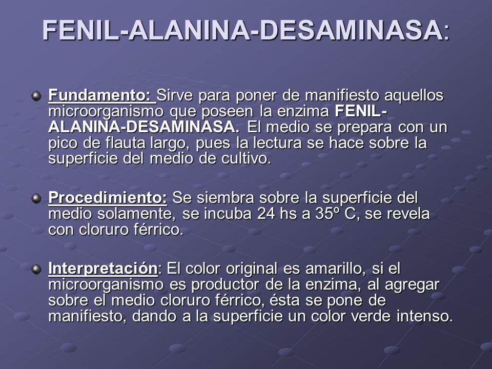 FENIL-ALANINA-DESAMINASA: Fundamento: Sirve para poner de manifiesto aquellos microorganismo que poseen la enzima FENIL- ALANINA-DESAMINASA. El medio