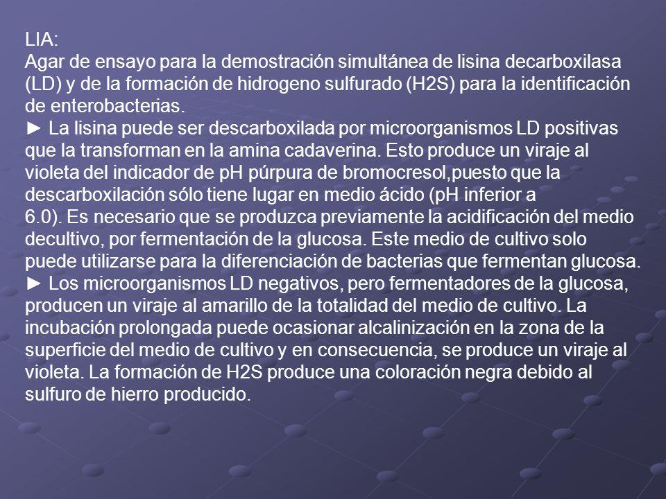 LIA: Agar de ensayo para la demostración simultánea de lisina decarboxilasa (LD) y de la formación de hidrogeno sulfurado (H2S) para la identificación