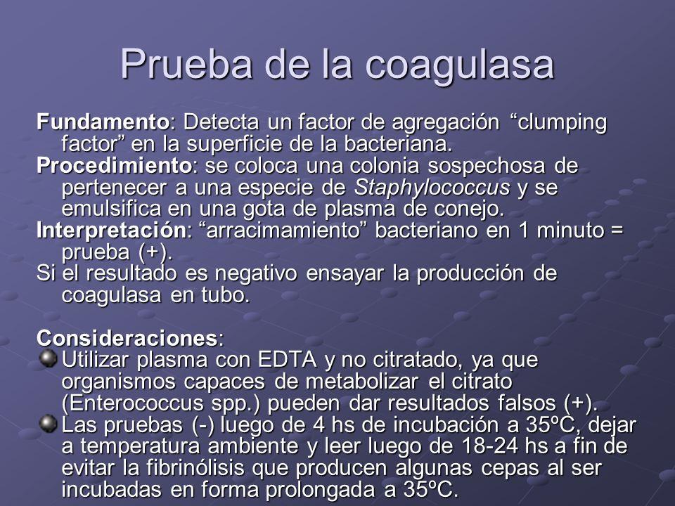 Prueba de la coagulasa Fundamento: Detecta un factor de agregación clumping factor en la superficie de la bacteriana. Procedimiento: se coloca una col