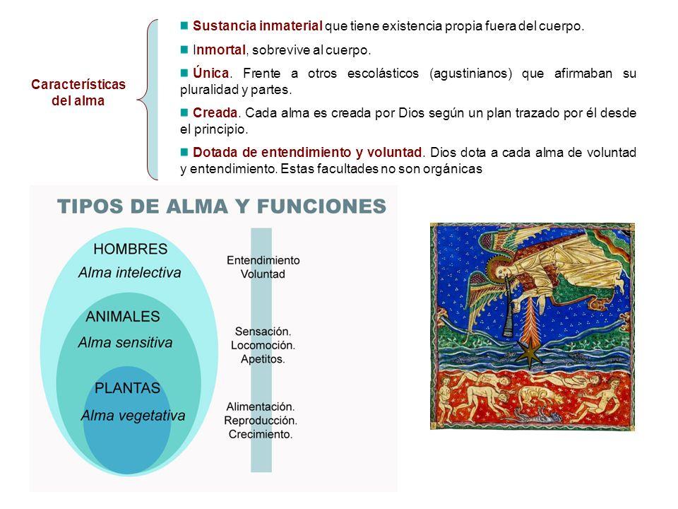 Características del alma Sustancia inmaterial que tiene existencia propia fuera del cuerpo. Inmortal, sobrevive al cuerpo. Única. Frente a otros escol