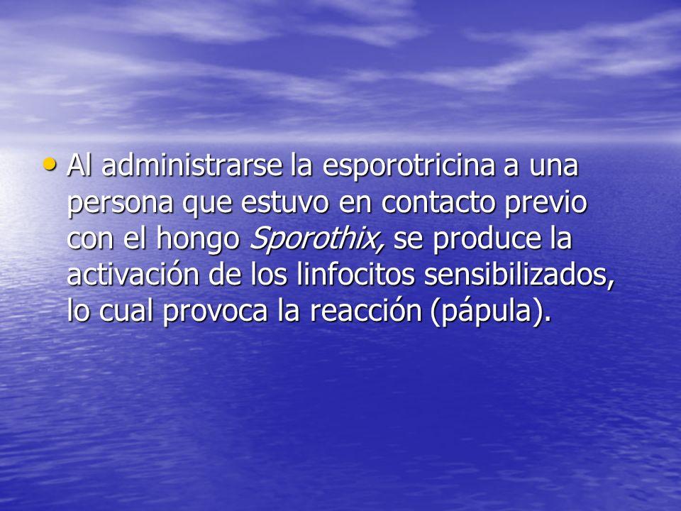 Al administrarse la esporotricina a una persona que estuvo en contacto previo con el hongo Sporothix, se produce la activación de los linfocitos sensi