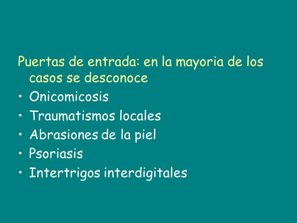 Puertas de entrada: en la mayoria de los casos se desconoce Onicomicosis Traumatismos locales Abrasiones de la piel Psoriasis Intertrigos interdigital