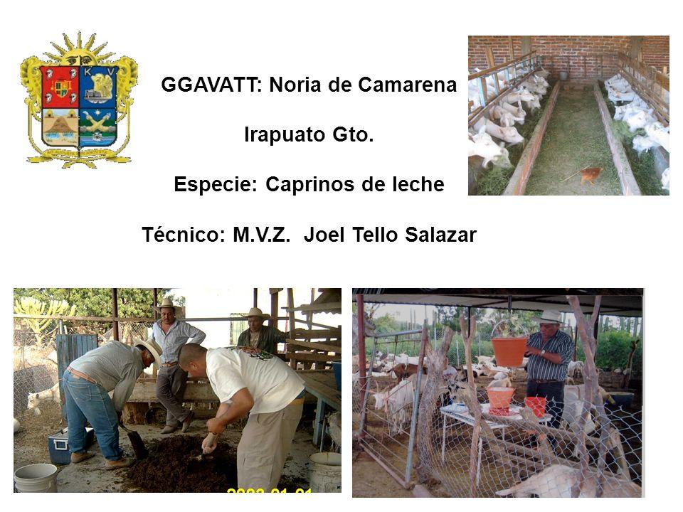 GGAVATT: Noria de Camarena Irapuato Gto. Especie: Caprinos de leche Técnico: M.V.Z. Joel Tello Salazar
