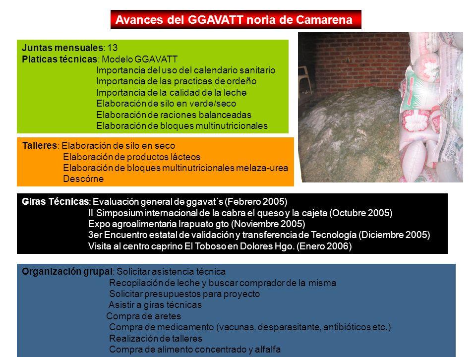 Avances del GGAVATT noria de Camarena Juntas mensuales: 13 Platicas técnicas: Modelo GGAVATT Importancia del uso del calendario sanitario Importancia
