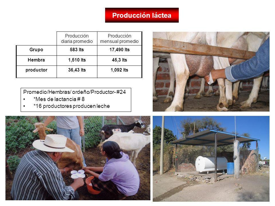 Producción láctea Promedio/Hembras/ ordeño/Productor- #24 *Mes de lactancia # 8 *16 productores producen leche Producción diaria promedio Producción m
