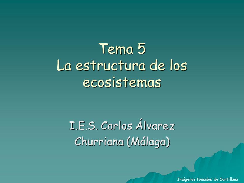 Tema 5 La estructura de los ecosistemas I.E.S. Carlos Álvarez Churriana (Málaga) Imágenes tomadas de Santillana