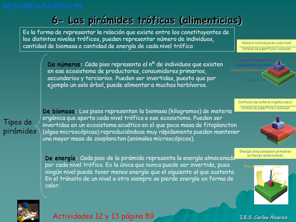 6- Las pirámides tróficas (alimenticias) RESUMEN PÁGINA 89 Actividades 12 y 13 página 89 I.E.S. Carlos Álvarez Tipos de pirámides De números: Cada pis