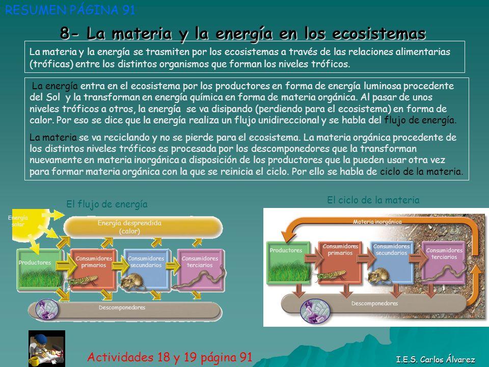 8- La materia y la energía en los ecosistemas RESUMEN PÁGINA 91 Actividades 18 y 19 página 91 I.E.S. Carlos Álvarez La materia y la energía se trasmit