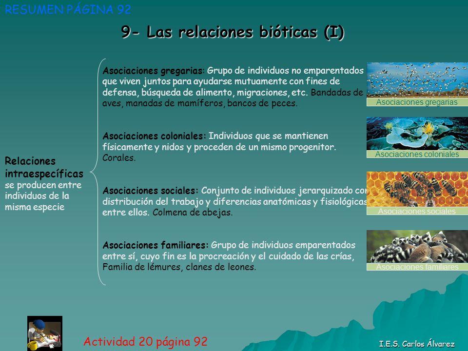 9- Las relaciones bióticas (I) RESUMEN PÁGINA 92 Actividad 20 página 92 I.E.S. Carlos Álvarez Relaciones intraespecíficas se producen entre individuos