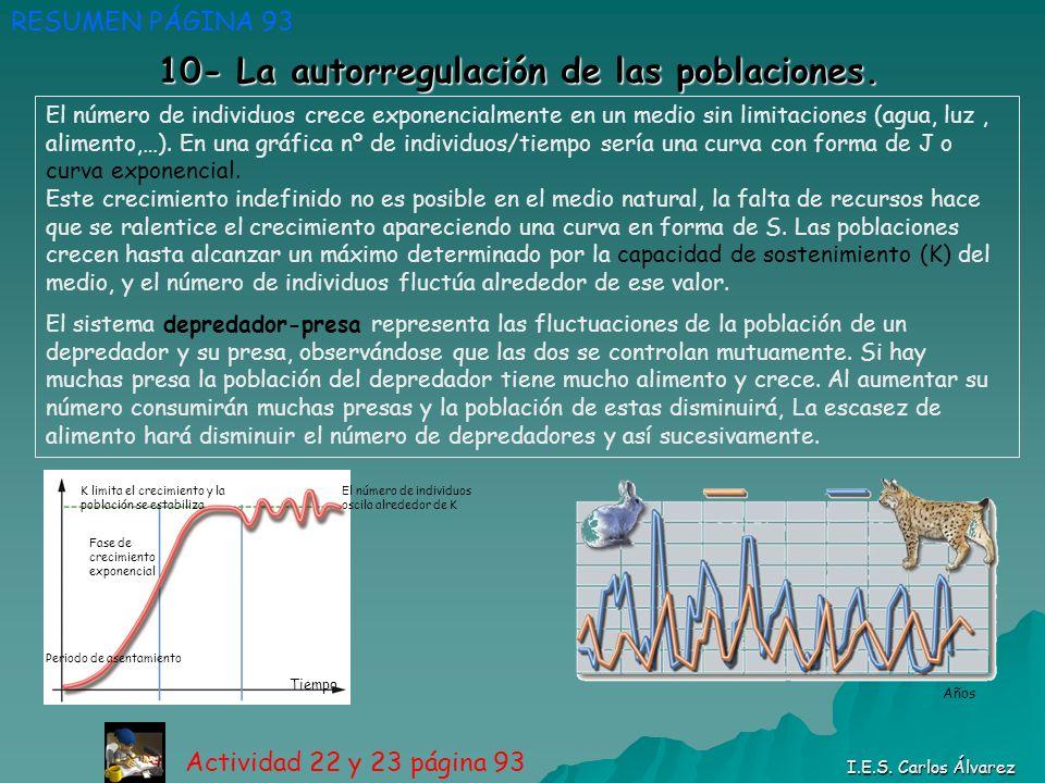 10- La autorregulación de las poblaciones. RESUMEN PÁGINA 93 Actividad 22 y 23 página 93 I.E.S. Carlos Álvarez Periodo de asentamiento Fase de crecimi