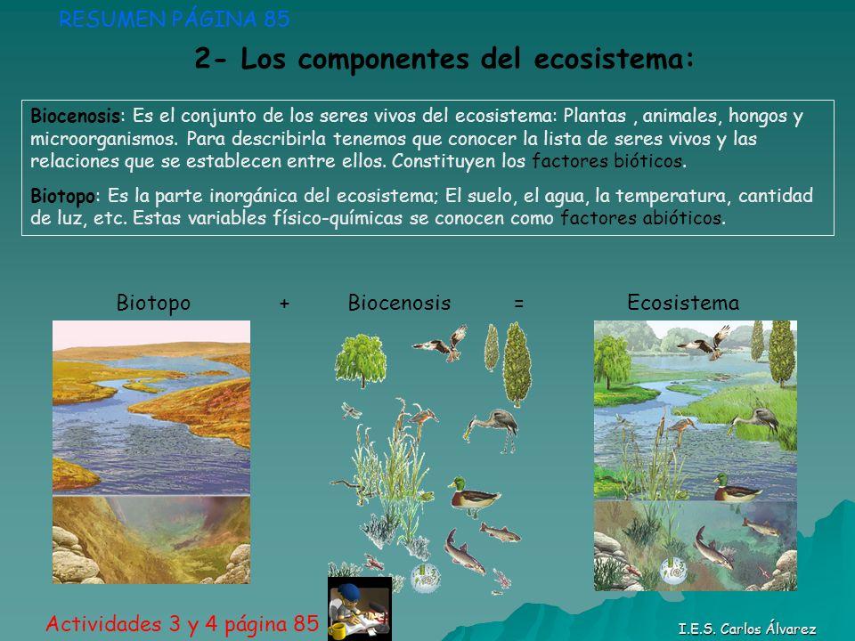 Biotopo + Biocenosis = Ecosistema RESUMEN PÁGINA 85 Actividades 3 y 4 página 85 Biocenosis: Es el conjunto de los seres vivos del ecosistema: Plantas,
