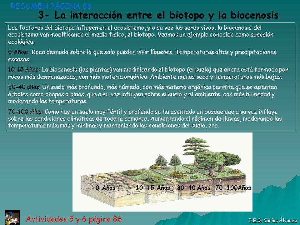 RESUMEN PÁGINA 86 I.E.S. Carlos Álvarez Actividades 5 y 6 página 86 3- La interacción entre el biotopo y la biocenosis 0 Años 10-15 Años 30-40 Años 70