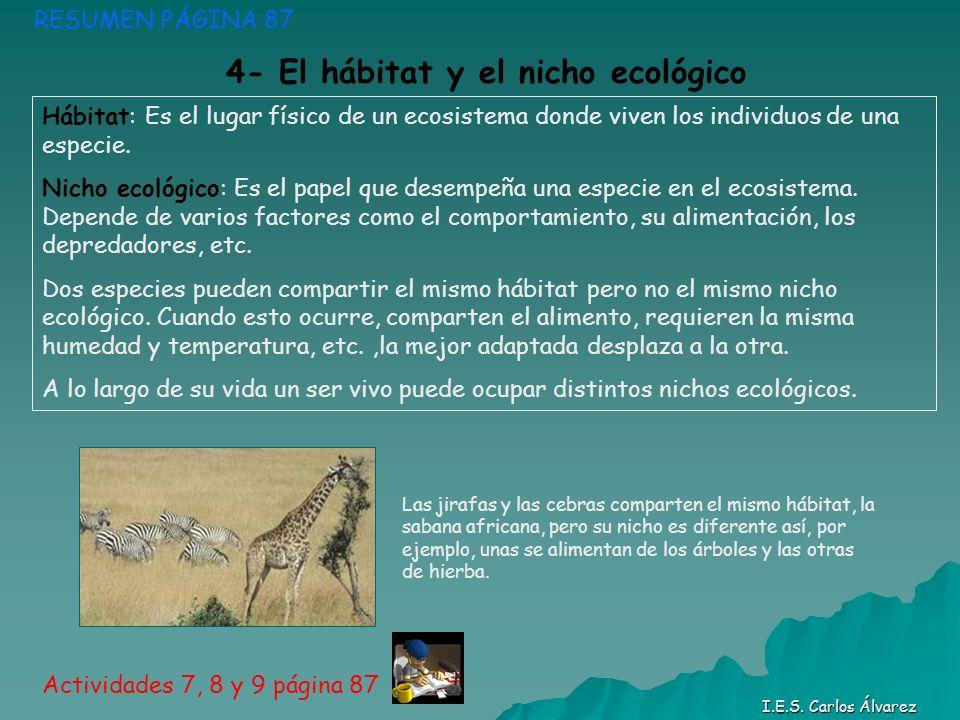 RESUMEN PÁGINA 87 Actividades 7, 8 y 9 página 87 I.E.S. Carlos Álvarez Hábitat: Es el lugar físico de un ecosistema donde viven los individuos de una