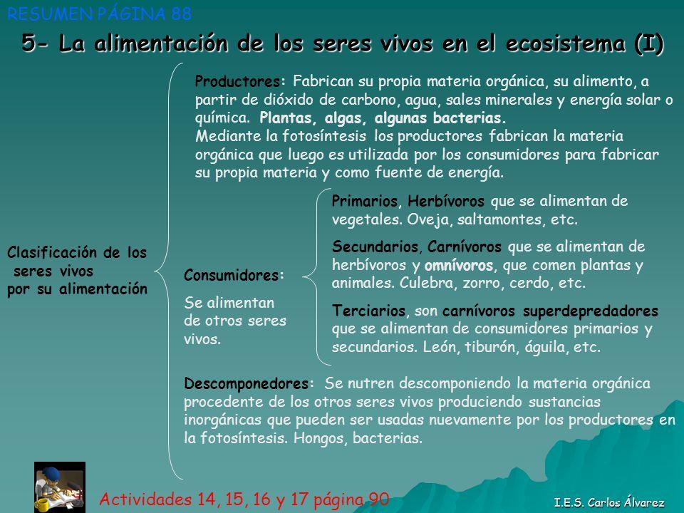 5- La alimentación de los seres vivos en el ecosistema (I) RESUMEN PÁGINA 88 I.E.S. Carlos Álvarez Clasificación de los seres vivos por su alimentació