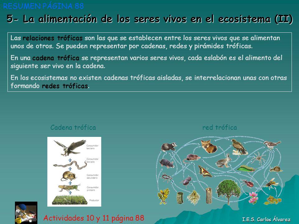 5- La alimentación de los seres vivos en el ecosistema (II) RESUMEN PÁGINA 88 Actividades 10 y 11 página 88 I.E.S. Carlos Álvarez Las relaciones trófi