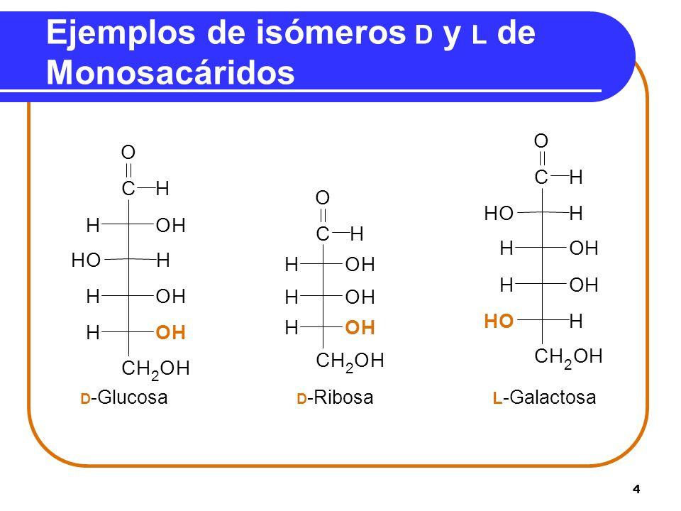 5 Repaso Identificar como isómero D o L. A.B. C. __-Ribosa __- Treosa __- Fructosa