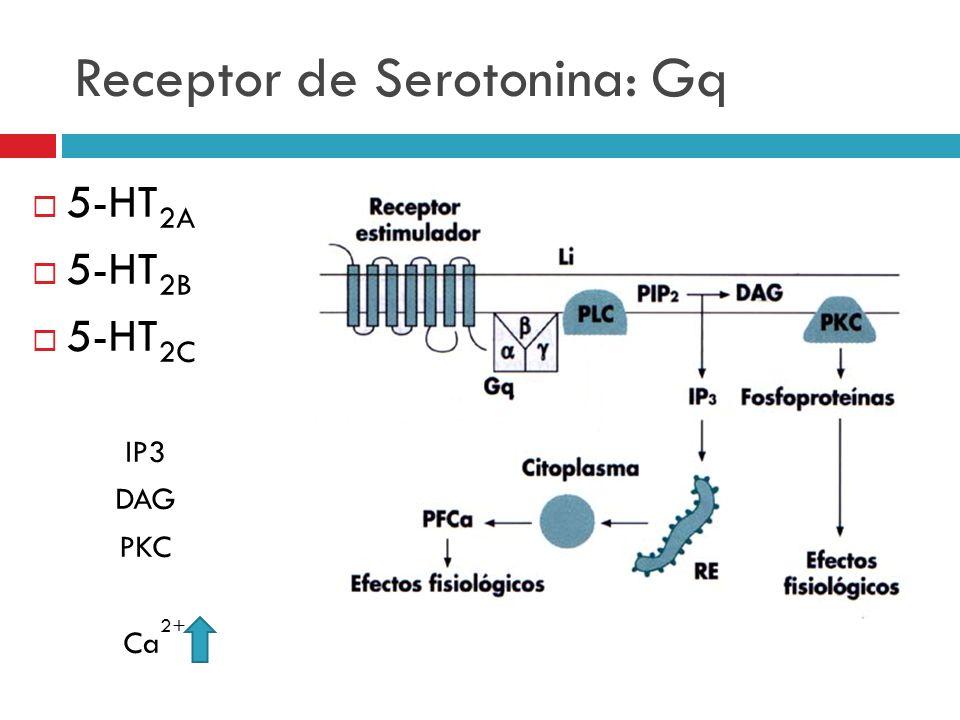 Receptor de Serotonina: Gq 5-HT 2A 5-HT 2B 5-HT 2C IP3 DAG PKC Ca 2+