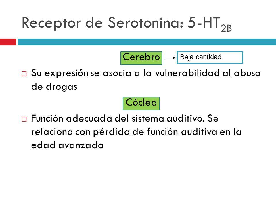 Receptor de Serotonina: 5-HT 2B Cerebro Su expresión se asocia a la vulnerabilidad al abuso de drogas Cóclea Función adecuada del sistema auditivo. Se