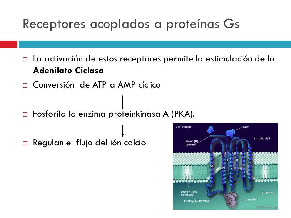Receptores acoplados a proteínas Gs La activación de estos receptores permite la estimulación de la Adenilato Ciclasa Conversión de ATP a AMP cíclico
