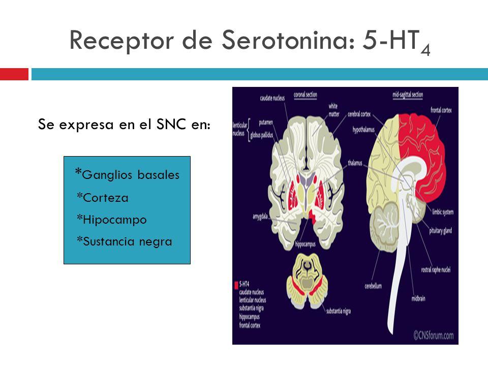 Receptor de Serotonina: 5-HT 4 Se expresa en el SNC en: * Ganglios basales *Corteza *Hipocampo *Sustancia negra