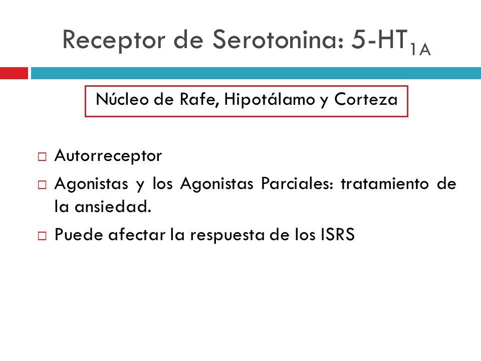 Receptor de Serotonina: 5-HT 1A Núcleo de Rafe, Hipotálamo y Corteza Autorreceptor Agonistas y los Agonistas Parciales: tratamiento de la ansiedad. Pu