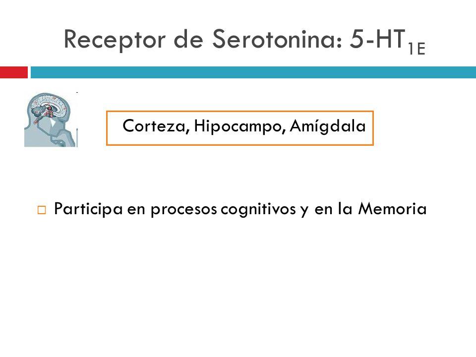Receptor de Serotonina: 5-HT 1E Corteza, Hipocampo, Amígdala Participa en procesos cognitivos y en la Memoria
