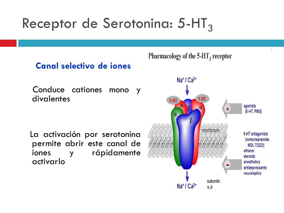 Receptor de Serotonina: 5-HT 3 Canal selectivo de iones Conduce cationes mono y divalentes La activación por serotonina permite abrir este canal de io