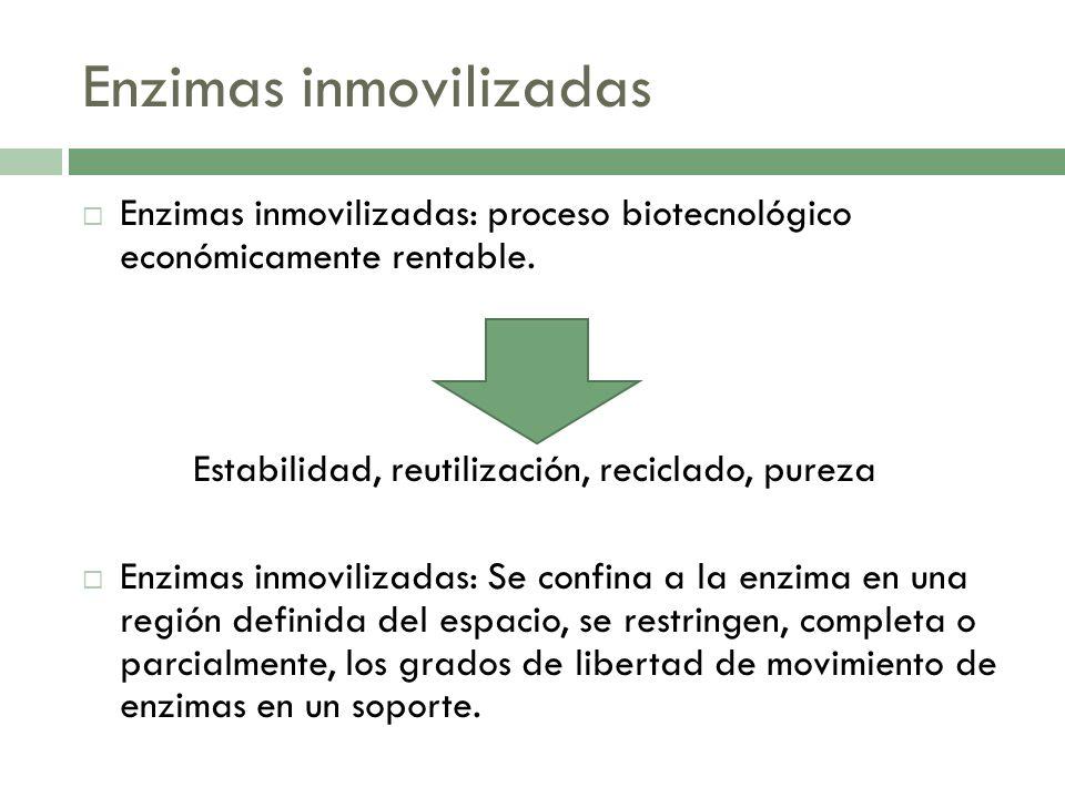 Enzimas inmovilizadas Enzimas inmovilizadas: proceso biotecnológico económicamente rentable. Estabilidad, reutilización, reciclado, pureza Enzimas inm