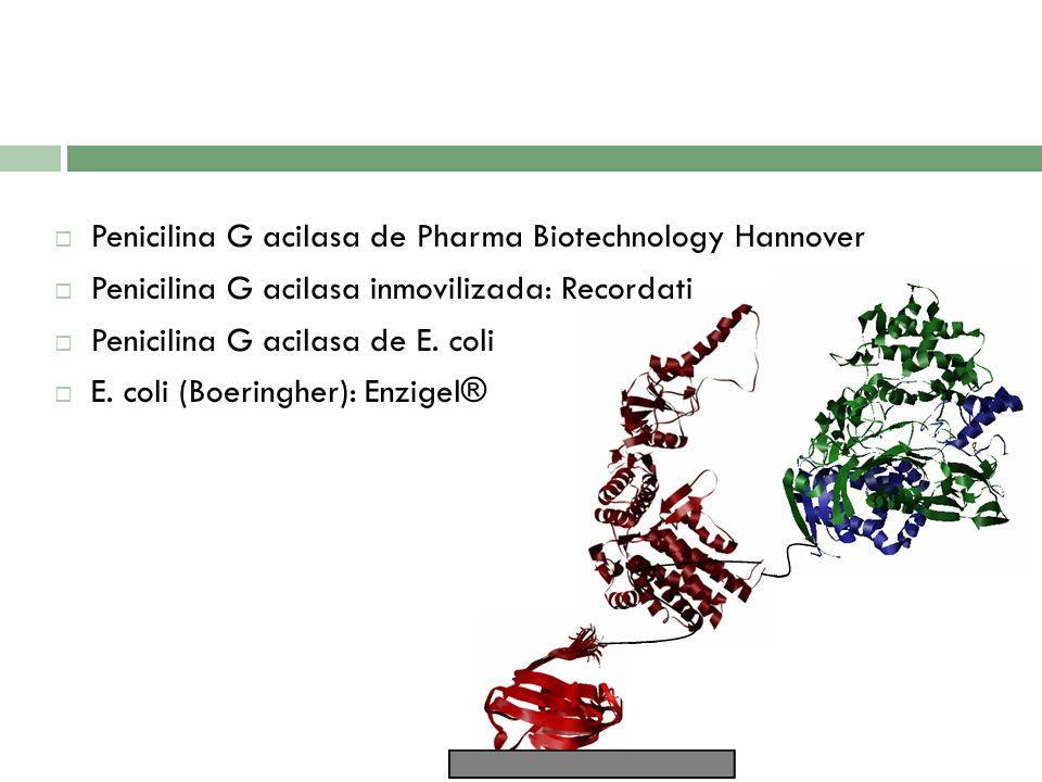 Penicilina G acilasa de Pharma Biotechnology Hannover Penicilina G acilasa inmovilizada: Recordati Penicilina G acilasa de E. coli E. coli (Boeringher