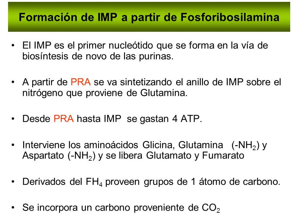 Formación de IMP a partir de Fosforibosilamina El IMP es el primer nucleótido que se forma en la vía de biosíntesis de novo de las purinas. A partir d